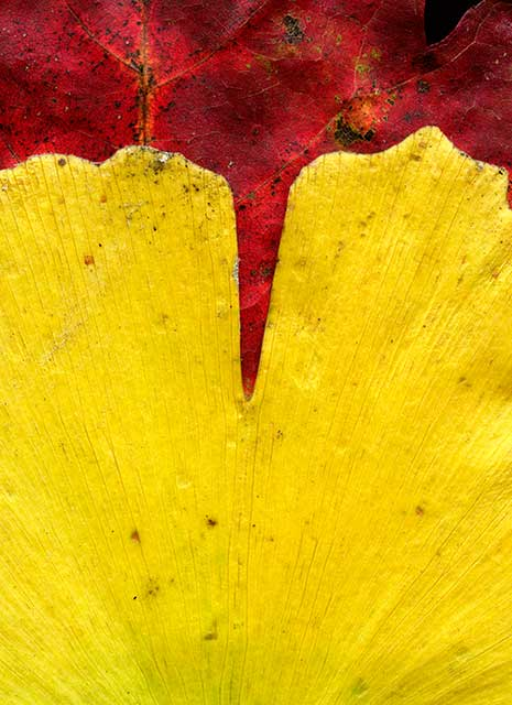 Leaves after Frankenthaler