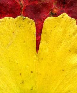 Leaves after Frankenthaler
