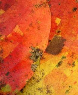 Leaves after Klee #2