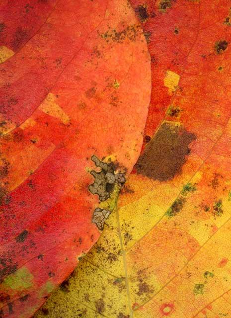 Leaves after Klee #2