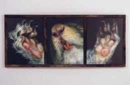 Squirrel (triptych)