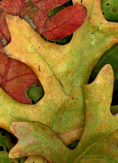 Leaves after Arp