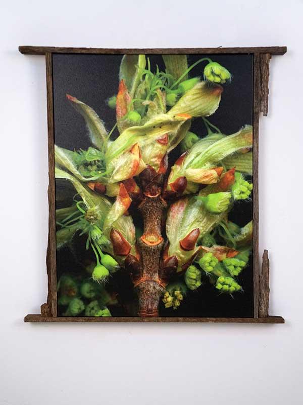 Leaves After Magritte (framed)
