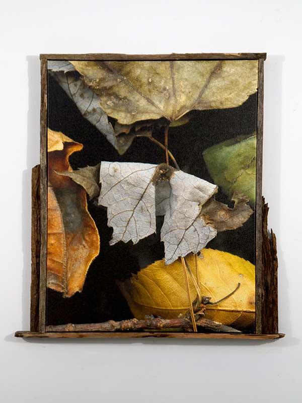 Leaves after Oleszko framed