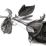 Zmarł Tata o. Jerzego Kulpy. Pogrzeb w środę