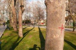 Gezi Park Agac