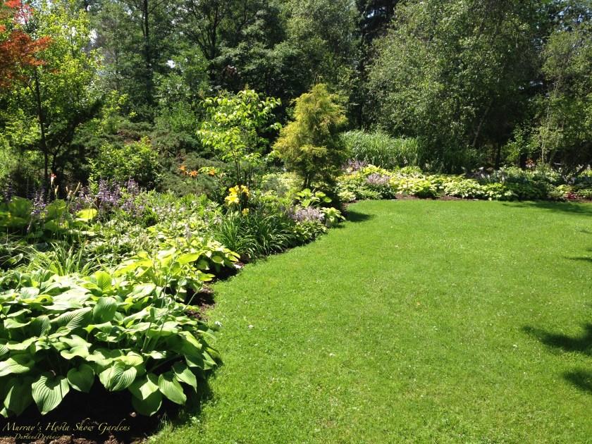 hosta garden shady solution