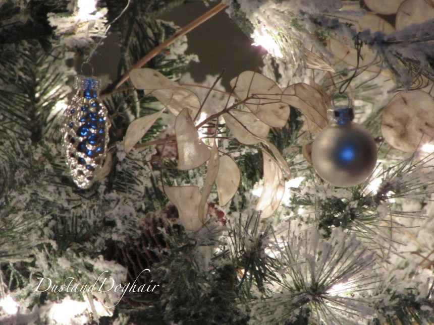 SilverDollar tree