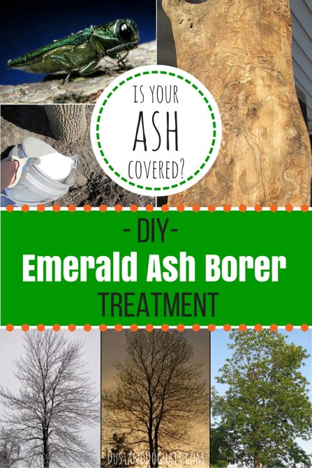 DIY Treatment for Emerald Ash Borer