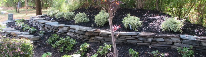 dry stack stone wall, jack frost, honeysuckle, shade garden