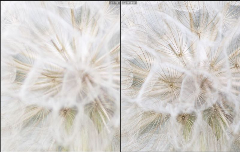 Canon Left | Zeiss Right