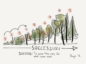 The ecological process of succession