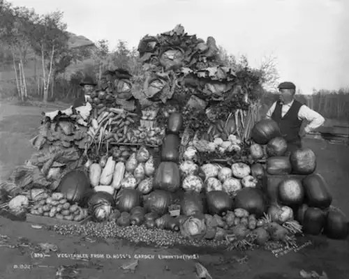 What Grows Here? Donald Ross with a vegetable display. Edmonton.