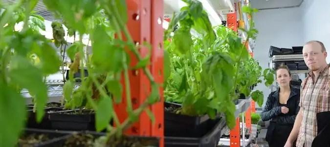 Ryan Mason and Cathryn Sprague of Reclaim Urban Farm showing off their herb and microgreen operation.