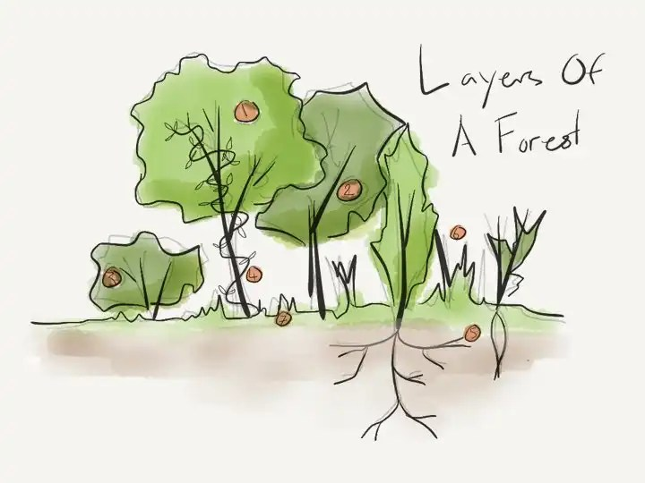Layers of a food forest.