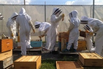 Members of the Northlands Youth Beekeeping Club perform a weekly hive inspection at pollination park. Edmonton Beekeeping.