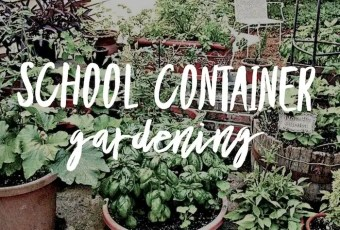 School container gardening. Growing food and her in containers and pots.