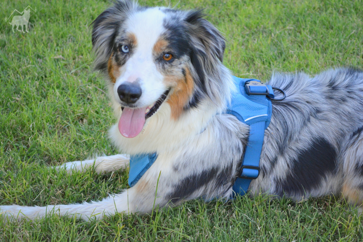 Hurtta - Cooling Harness