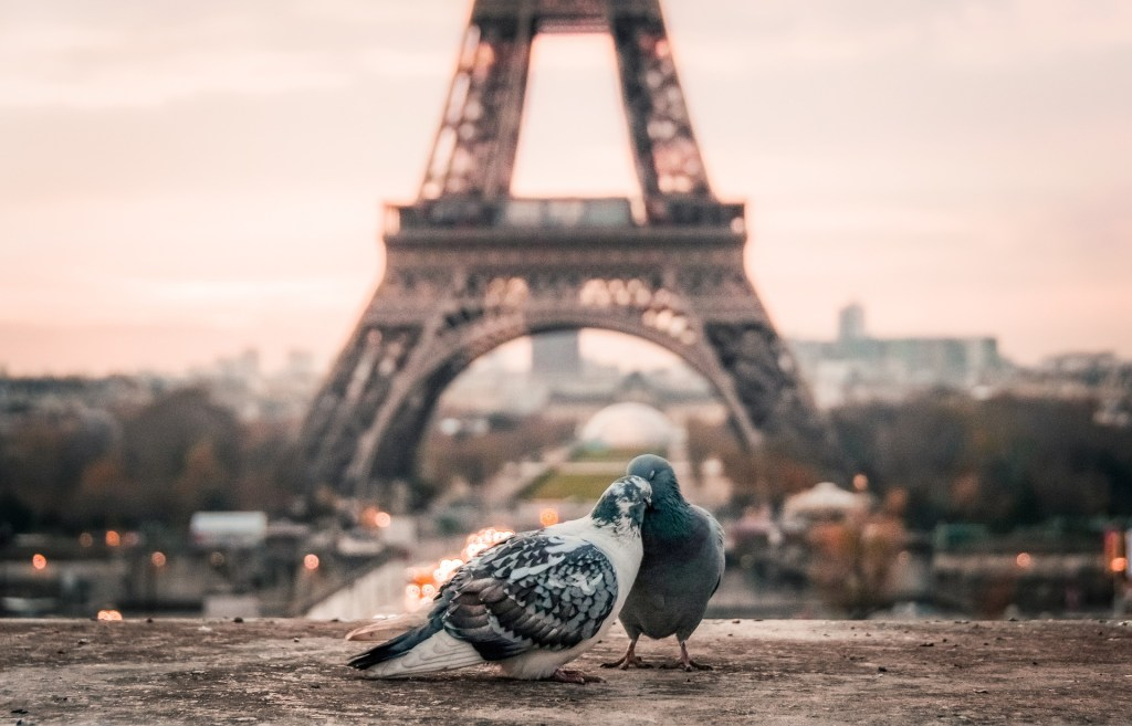 Two pigeons canoodle in front of the Eiffel Tower.