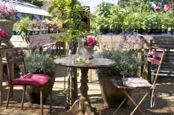 Petersham Cafe