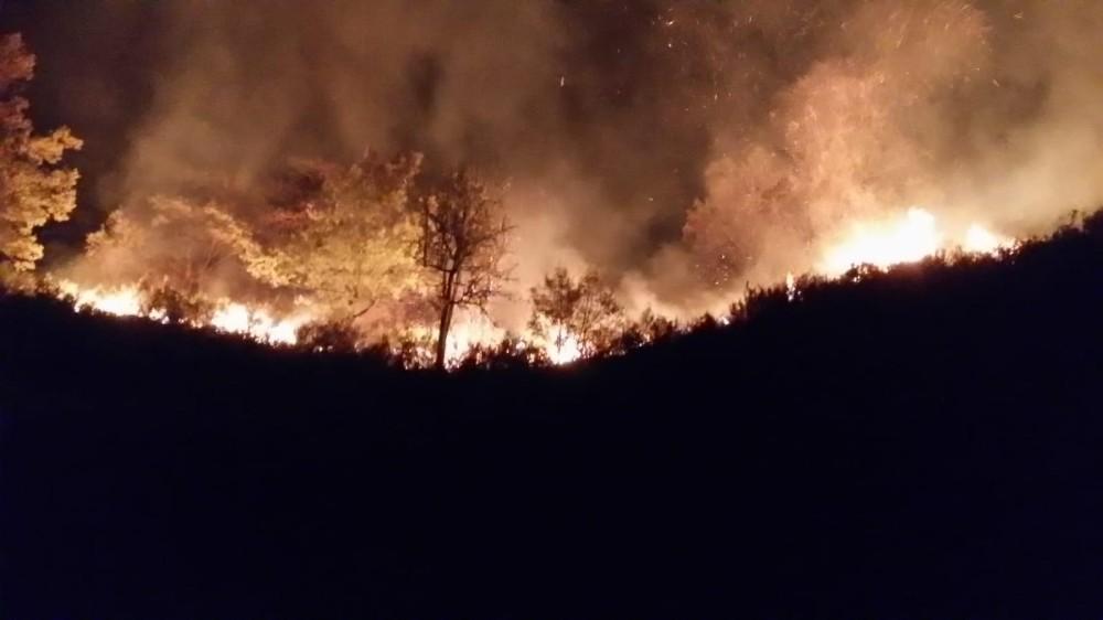 Düzce'de orman yangınına müdahale sürüyor