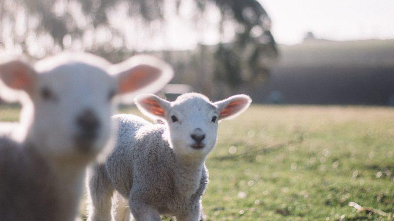 Jak pomáhat zvířatům, když nechcete (nemůžete) být vegetariánem