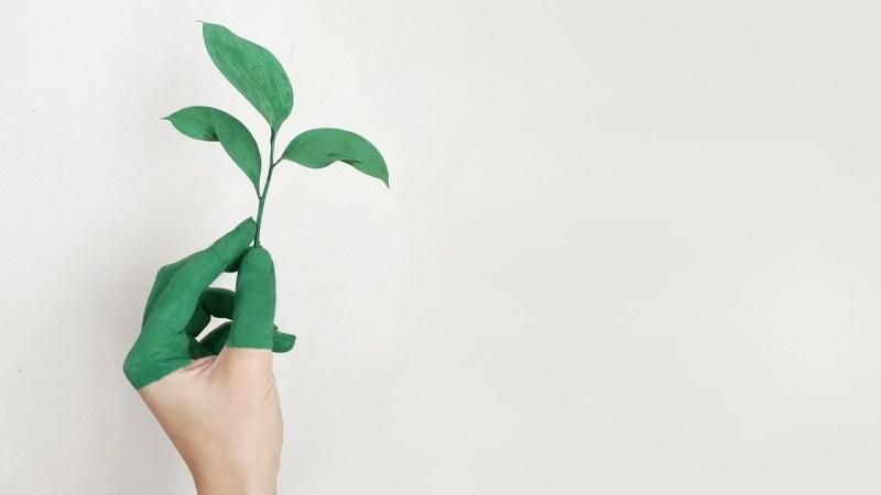 Co je to greenwashing?