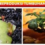 PPT Sistem Reproduksi Tumbuhan Materi IPA SMP Kurikulum 2013