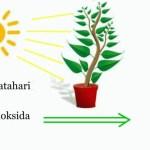 Soal IPA Fotosintesis SMP MTs Kurikulum 2013 dan Kunci Jawaban