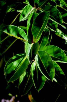 Morfología de las plantas de interior