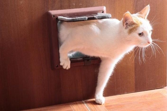 дверь с окошком для кошки