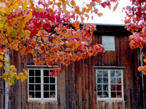 Fall Barn Windows