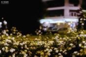24 de Julio. Una tragedia se esconde detrás