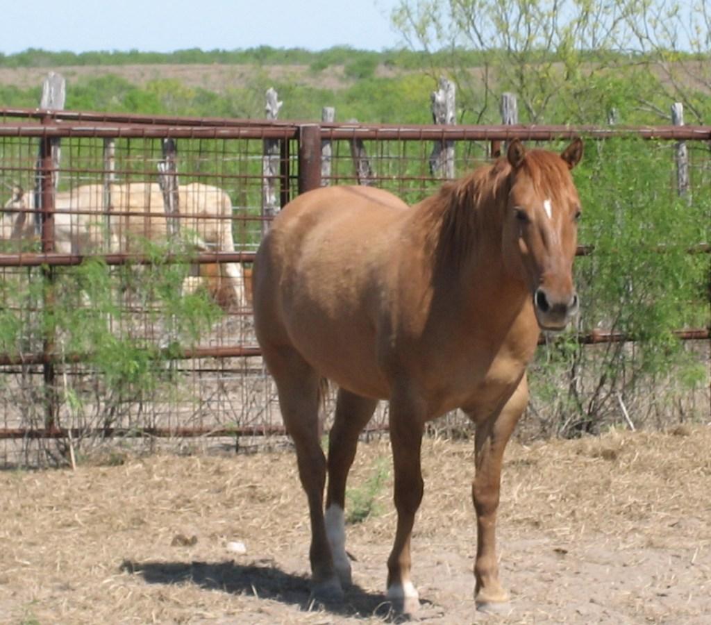 Horses – 5