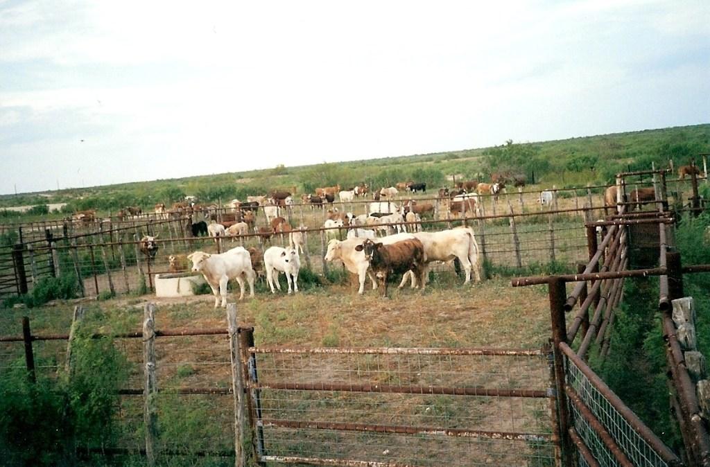 Ranching – 22