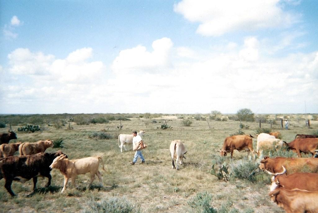 Ranching – 8