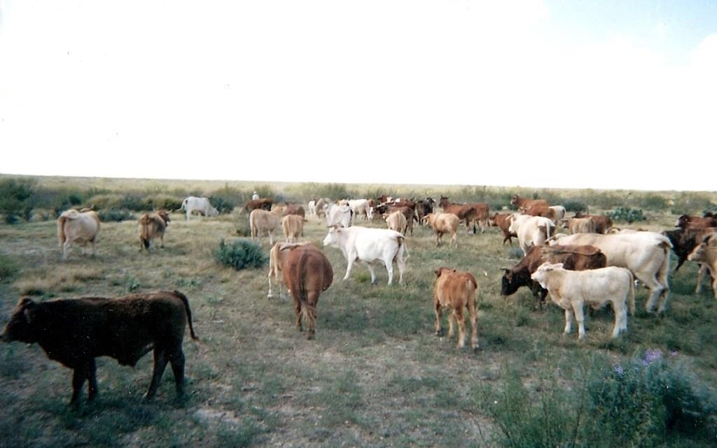 Ranching – 9
