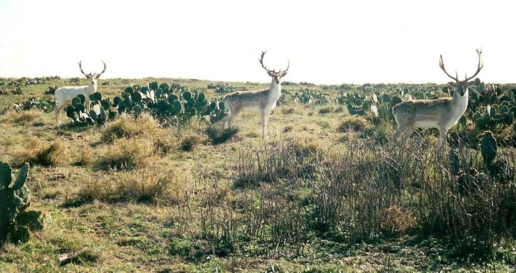 Wildlife – 13