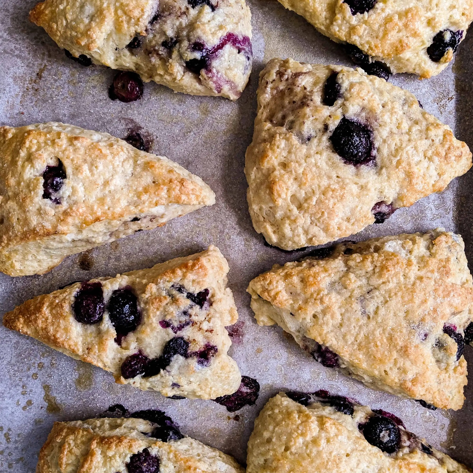 Dwardcooks Blueberry Scones - Baked