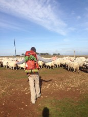 I tried being a shepherd. I wasn't very good.