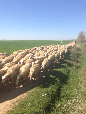 The equivalent of a traffic jam on the Camino.
