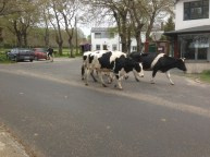 This counts as traffic on the Camino.