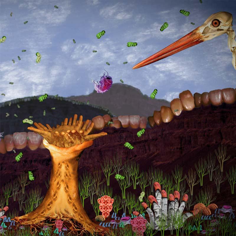 "Subviola -""Dustmites Depend On Us / Vinir okkar rykmaurarnir"""