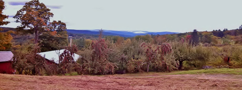 View of the orchard at harvest time. Dummerston, VT