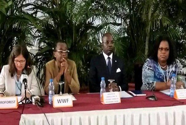huile de palme le gabon creuse son sillon - Huile de palme : Le Gabon creuse son sillon