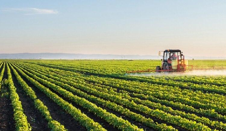 Agriculture LITFC au chevet de la Gambie - Agriculture : L'ITFC au chevet de la Gambie