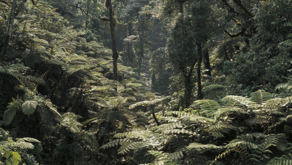 RDC: une ONG accuse un général de trafic de permis forestiers