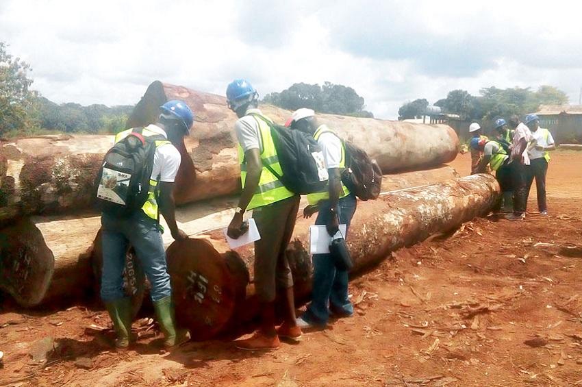 contrôle de bois à transformer