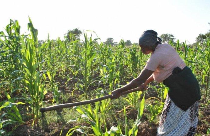 Afrique subsaharienne: le FIDA craint une «génération perdue» de jeunes ruraux