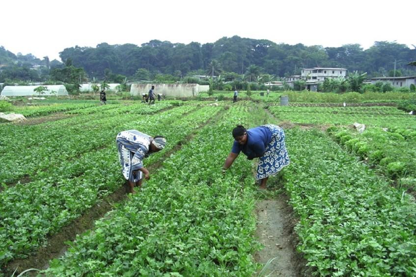 Gabon : L'agriculture bientôt enseignée dans les écoles